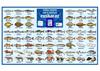 """Affiche """"le poisson"""" pour apprendre l'euskara"""